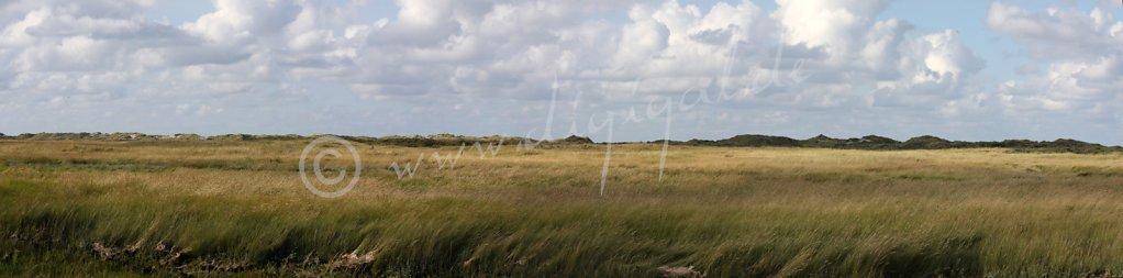 Hoge Hörn - Die Ostspitze der Insel