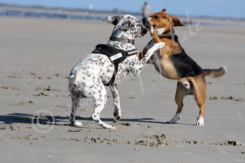 Am Strand lässt es sich besonders gut toben!