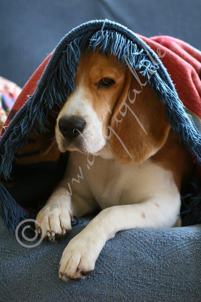 Nie ohne Decke schlafen. Auf gar keinen Fall. Niemals.