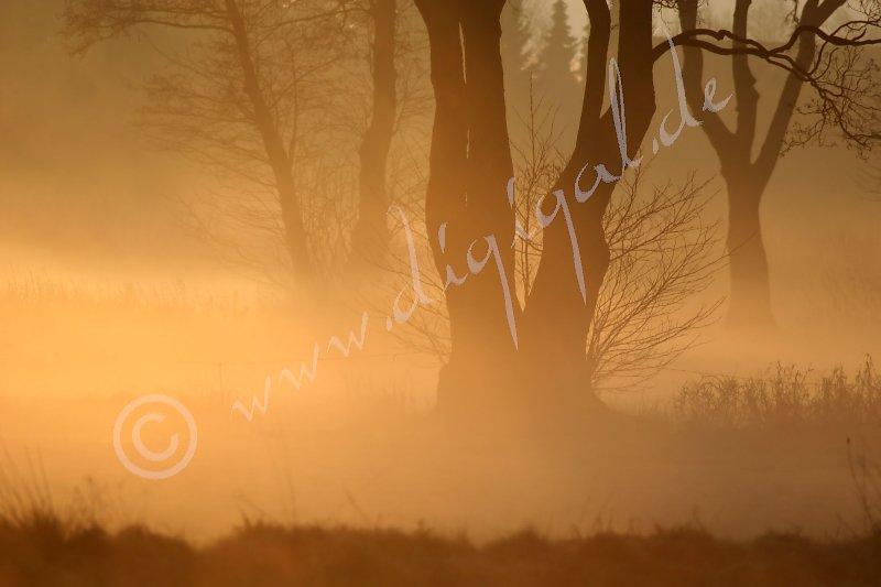 Morgennebel an der Hunte